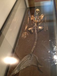 Squelette de sirène, Musée National Copenhague, 2012 (Wikimedia Commons)